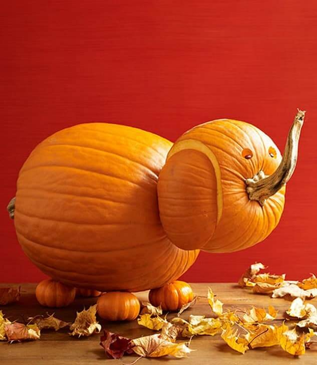 Elephant Pumpkin Carvin