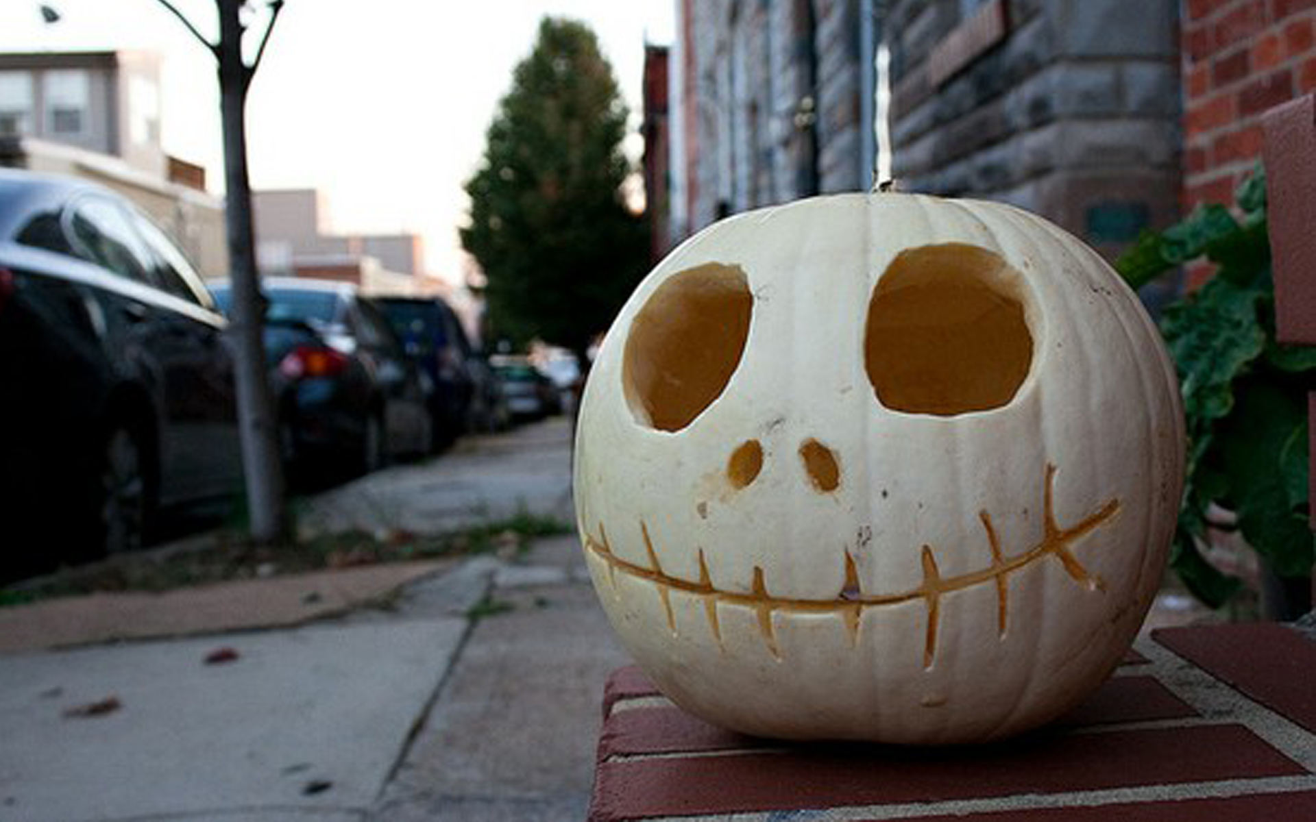 White halloween pumpkin carving creative ads and more White pumpkin carving ideas