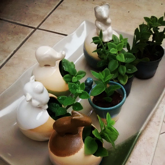 cute ceramic planters