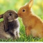 easter bunnies hd wallpaper