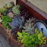 succulent-garden-in-a-toolbox