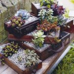 succulent-garden-in-old-drawers