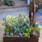 succulent-garden-container