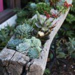 succulent-garden-in-a-log