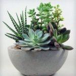 succulents-in-concrete-bowl