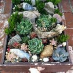 succulents-in-old-wood-crate