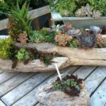 succulents-in-wood-log