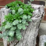 succulents-in-a-tree-trunk-planter