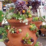 succulents-in-strawberry-pot