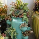 succulents-in-strawberry-pots