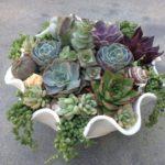 succulents-mini-garden