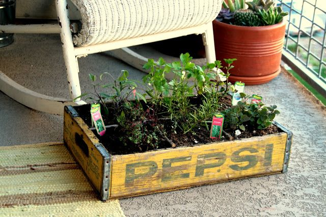DIY Herb Garden In An Old Crate