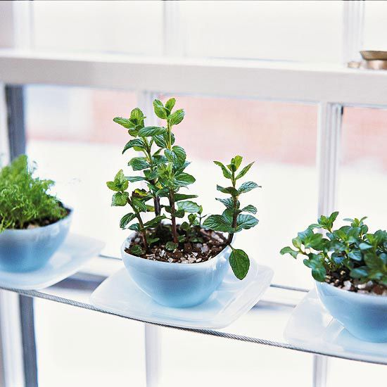 DIY Teacup Herb Garden