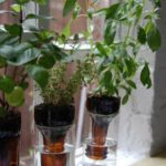 DIY Window Herb Garden
