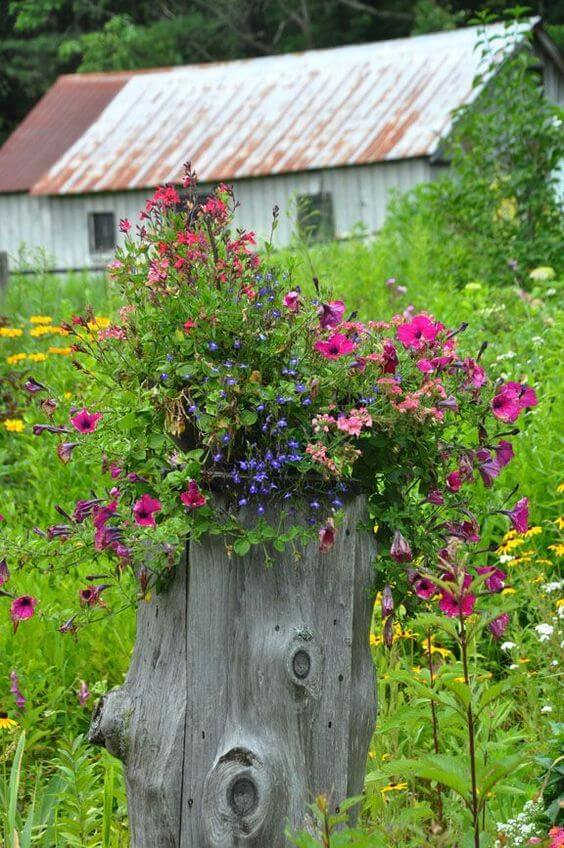 Flower Bed In Ugly Tree Stump
