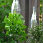 Glass Bottle Hanging Herb Garden