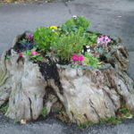 Old Tree Stump Flower Garden Idea