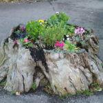 Old Tree Stump Flower Garden Idea