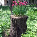 Tree Stump Garden Tulips
