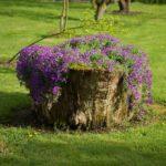 Tree Stump Planter Idea