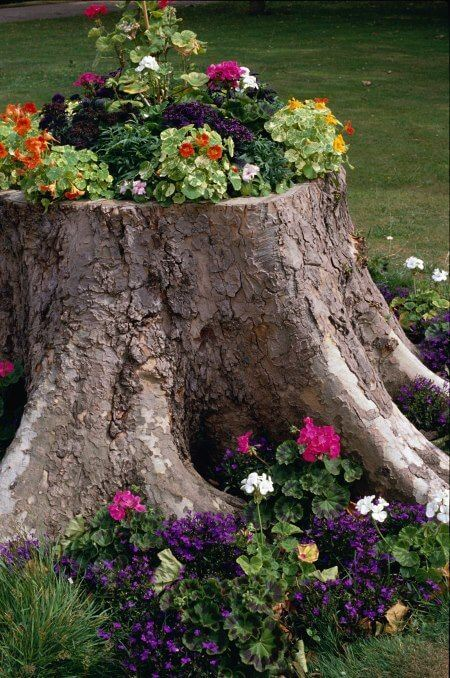 Tree Stump Planter 2
