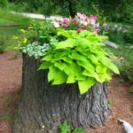 Tree Stump Planter Idea 2