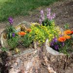 Tree Stump Flower Garden Idea