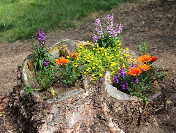 Tree Stump Flower Garden Idea