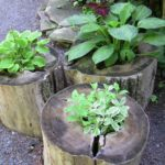 Tree Stumps Flower Garden Idea