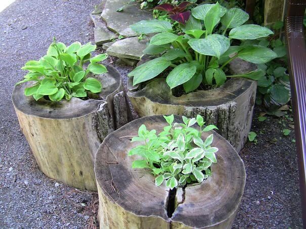 Tree Stumps Flower Garden Idea