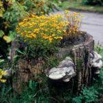 Wild Tree Stump Garden