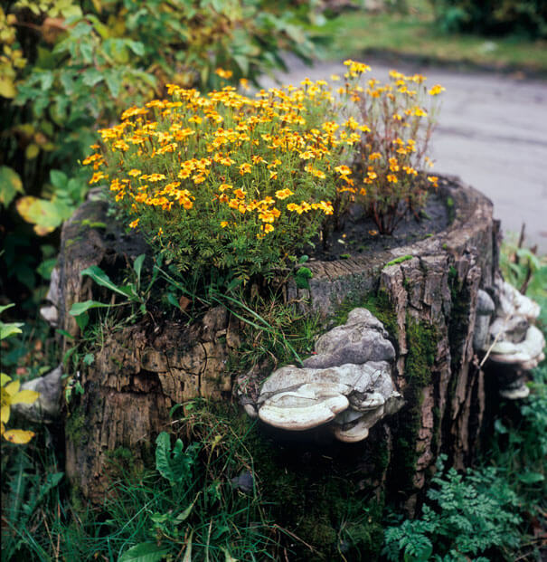 Wild Tree Stump Garden
