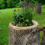 Nice Tree Stump Flower Garden