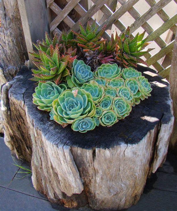 Tree Stump Flower Garden Succulents