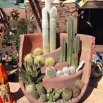 Awesome Cactus Pot
