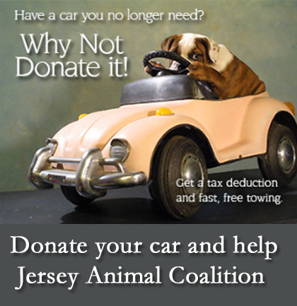 Donate Your Car For Jersey Animal Coalition