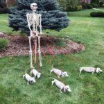 Skeleton Walking Dog Halloween Decoration